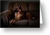 K9 Greeting Cards - Looking Out The Window - German Shepherd Dog Greeting Card by Angie McKenzie