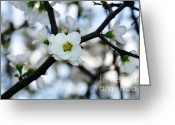 Abstract Sky Greeting Cards - Looking through the Blossoms Greeting Card by Kaye Menner