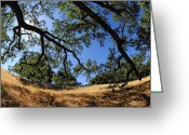 Tree Limbs Greeting Cards - Looking Through The Oaks Greeting Card by Donna Blackhall