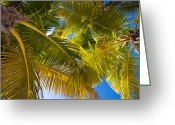 Virgin Islands Greeting Cards - Looking Up Greeting Card by Adam Romanowicz