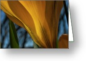 Yellow Crocus Greeting Cards - Looking up at a Yellow Crocus Greeting Card by ShaddowCat Arts - Sherry