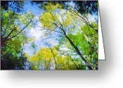 Outdoor Canopy Greeting Cards - Looking Up Greeting Card by Darren Fisher