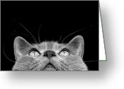 Head-shot Greeting Cards - Looking up Greeting Card by Laura Melis
