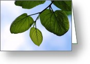 Plants Greeting Cards Greeting Cards - Looking Up Greeting Card by Rhonda Kretzer
