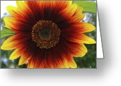 Burgeon Greeting Cards - Looks like sunshine Greeting Card by Shauna OBrien