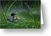 Pads Drawings Greeting Cards - Loon mom protecting baby Greeting Card by Sharon Molinaro