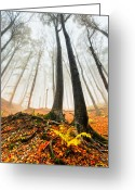 Bulgaria Greeting Cards - Lords of the Forest Greeting Card by Evgeni Dinev