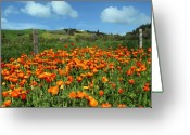 California Landscapes Greeting Cards - Los Olivos Poppies Greeting Card by Kurt Van Wagner