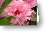 Flower Gardens Greeting Cards - Lost in the Shadows Greeting Card by Christine Belt