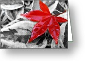 Maple Leaf Greeting Cards - Lost Greeting Card by Kaye Menner
