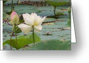 Hare Greeting Cards - Lotus and Bud Greeting Card by Vijay Sharon Govender