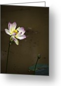 Flowers Photographs Greeting Cards - Lotus and Friend Greeting Card by Rob Travis
