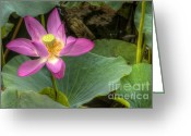 Lotus Full Bloom Greeting Cards - Lotus Greeting Card by Andreas Jancso