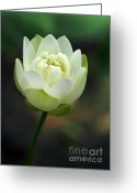 Water Gardens Greeting Cards - Lotus Blooming Greeting Card by Sabrina L Ryan