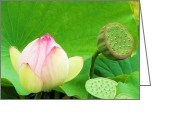 Lotus Seed Pod Greeting Cards - Lotus Blossom to Pod Greeting Card by Michele Penner