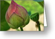 Lotus Bud Greeting Cards - Lotus dreaming 3 Greeting Card by Fran Woods