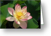 Lotus Seed Pod Greeting Cards - Lotus Flower and Dragonfly Greeting Card by Eva Kaufman