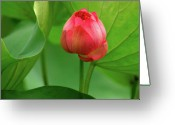 Lotus Bud Greeting Cards - Lotus Flower Greeting Card by Harry Spitz