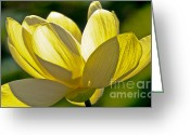 Aquatic Flower Greeting Cards - Lotus Flower Greeting Card by Heiko Koehrer-Wagner