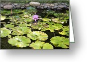 Lilly Pad Greeting Cards - Lotus on a Pad Greeting Card by Christian Griffin