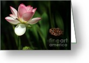 Lotus Seed Pod Greeting Cards - Lotus Opening to the Sun Greeting Card by Sabrina L Ryan