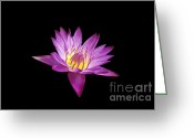 Patty Malajak Greeting Cards - Lotus Greeting Card by Patty Malajak