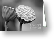 Hawaiian Pond Greeting Cards - Lotus Pods in Black and White Greeting Card by Sabrina L Ryan