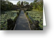 Lilly Pads Greeting Cards - Lotus Pool At Pura Taman Swasti Temple Greeting Card by Tim Laman
