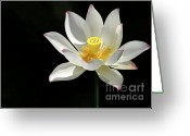 Water Gardens Greeting Cards - Lotus Reaching for the Sun Greeting Card by Sabrina L Ryan