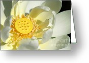 Lotus Seed Pod Greeting Cards - Lotus Up Close Greeting Card by Sabrina L Ryan