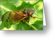 Cicadas Greeting Cards - Loud Critter Greeting Card by Michael Lambert