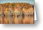 Fall Photographs Greeting Cards - Louisiana Fall Greeting Card by Ester  Rogers