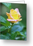 Yellow Flower Digital Art Greeting Cards - Love and a Yellow Rose Greeting Card by Michelle Wiarda