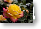 Designers Choice Photo Greeting Cards - Love and Peace Greeting Card by Don  Wright