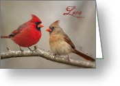 Red Birds Greeting Cards - Love Greeting Card by Bonnie Barry