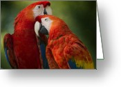 Red Birds Greeting Cards - Love  Greeting Card by Joseph G Holland