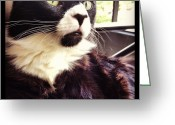Petstagram Greeting Cards - #love #kitty #petstagram #instapets Greeting Card by Robyn Spittle