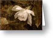 Love Letter Greeting Cards - Love Letter IX Cape Jasmine Gardenia Greeting Card by Jai Johnson