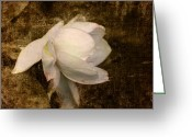 Love Letter Greeting Cards - Love Letter VIII Cape Jasmine Gardenia Greeting Card by Jai Johnson