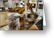 Rehabilitate Greeting Cards - Love My Tail Greeting Card by Michelle Milano