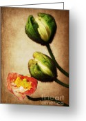 Bud Mixed Media Greeting Cards - Love poppies Greeting Card by Angela Doelling AD DESIGN Photo and PhotoArt