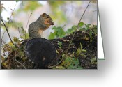 Nutty Greeting Cards - Love them Nuts Greeting Card by Wendi Evans