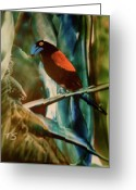 Lovebird Painting Greeting Cards - Lovebird Greeting Card by Terry Sussman