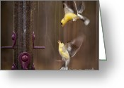 Art On Wall Greeting Cards - Lovely FIght Greeting Card by Venura Herath