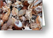 Tans Greeting Cards - Lovely Seashells Greeting Card by Carol Groenen