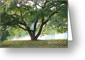 City Garden Greeting Cards - Lovely Tokyo Tree with Pond Greeting Card by Carol Groenen