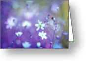 Wildflower Photography Greeting Cards - Lovestruck in Purple Greeting Card by Amy Tyler