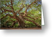 Low Country Greeting Cards - Low Limbs Greeting Card by Drew Castelhano