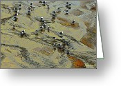 Oregon Wildlife Digital Art Greeting Cards - Low Tide 2 Greeting Card by Steve Warnstaff
