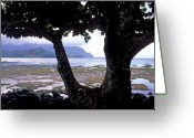 Featured Artwork Prints Greeting Cards - Low Tide and the Tree Greeting Card by Kathy Yates